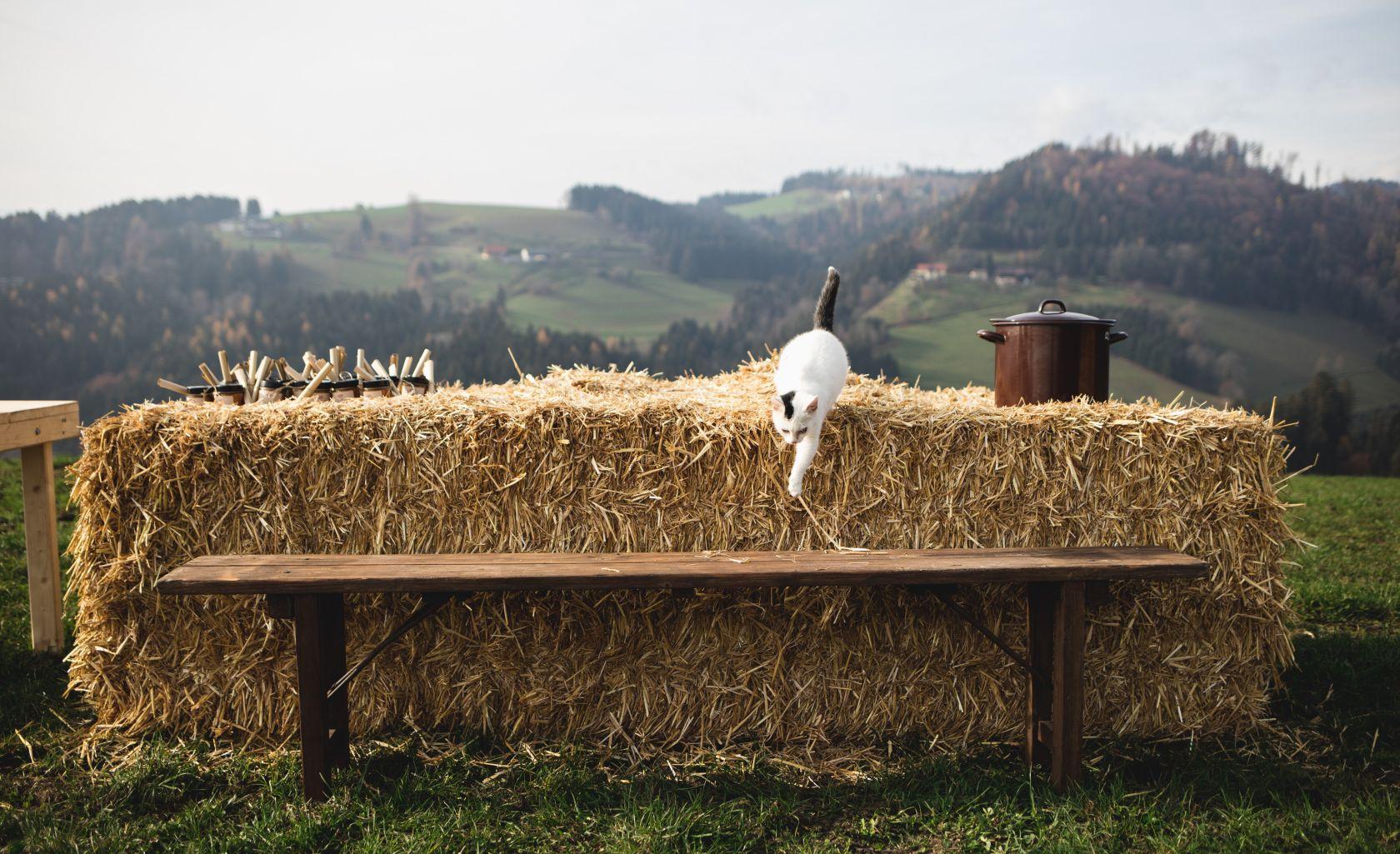 Aus Bauernhand